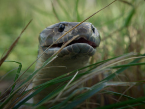 Australia: fauna letal - Humedales