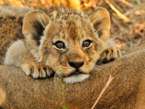 Animales Bebé del Mundo - África