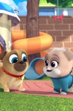 Bingo y Rolly - Días de mascotas en el trabajo/ La fiesta del