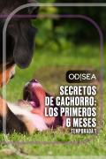 Secretos de cachorro: los primeros 6 meses | 1temporada