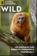 Los animales más raros de Sudamérica | 1temporada