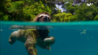 BBC Earth - Planeta Tierra II: Islas