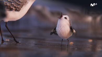 Movistar Disney·Pixar: Piper