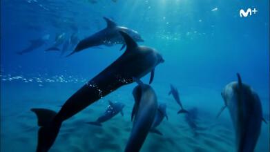 David Attenborough y el dragón marino | Delfines |#0