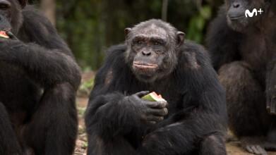 Scott y Milá: La isla de los chimpancés | #0