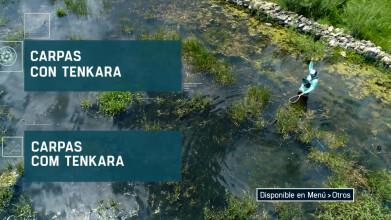 Carpas con Tenkara